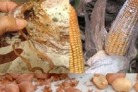 Những loại thực phẩm nguy cơ gây ung thư